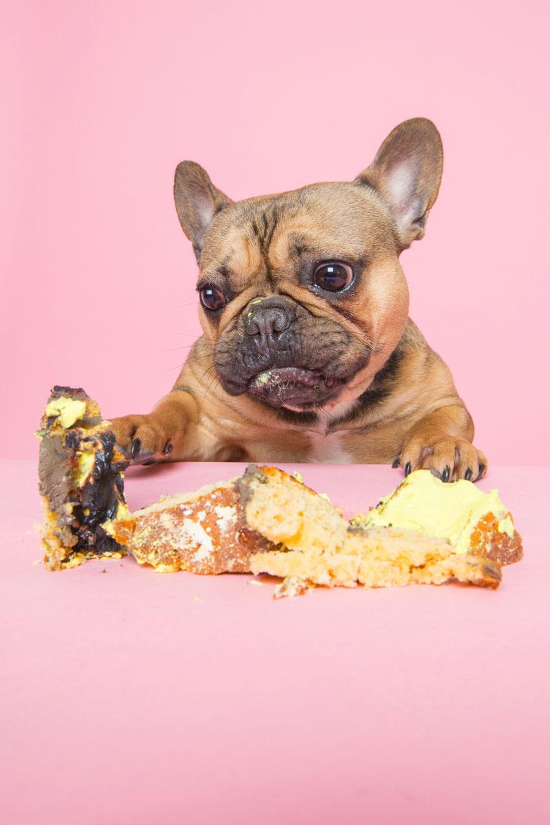 dog cake smash