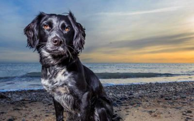 Why hire a professional pet photographer?
