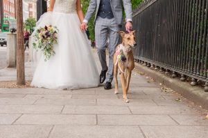 lurcher with bride and groom