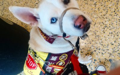 The Dog who helped: Meet Bane the Assistance Dog and his handler Zara