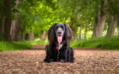 The Black Hole: 5 tips for photographing black dogs