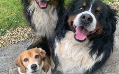 The Pawtrait Pack: Karen talks dogs, photographs and pawsitivity.